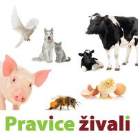 projekt_Pravice-zivali.png